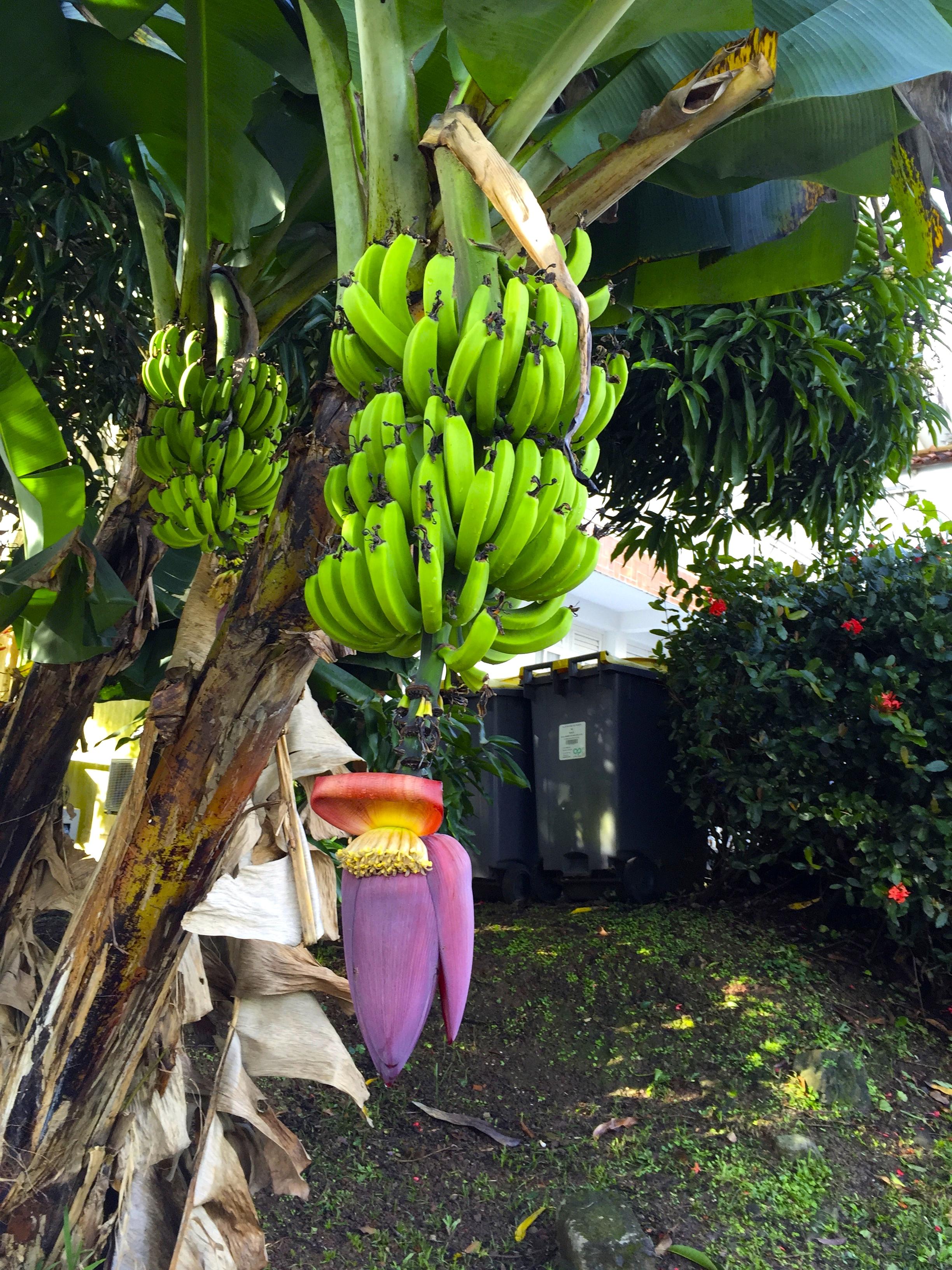 S minaire les modes de production agricole traditionnels for Chambre agriculture martinique